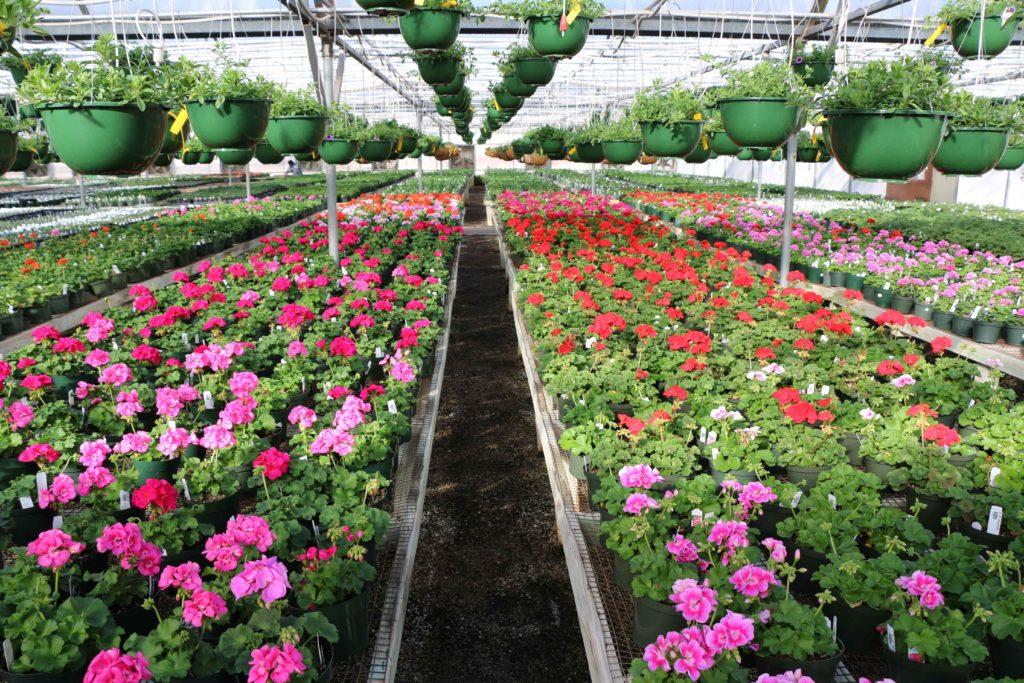 Precure Nursery Garden Center Okc
